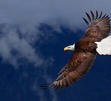Wonderful World of Eagles by EagleHunter
