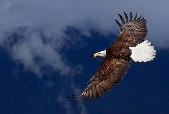 Flyin' High by EagleHunter
