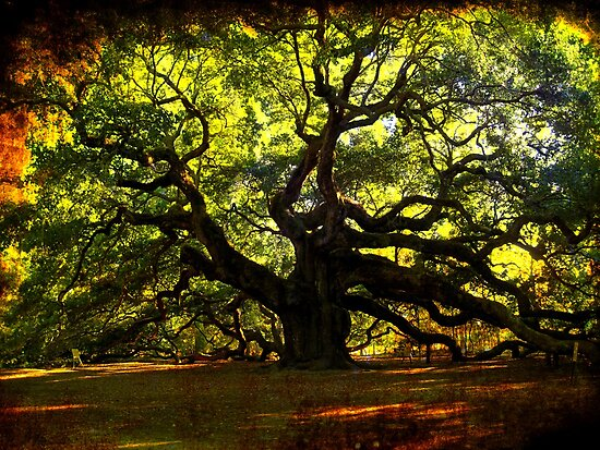 The famous Angel Oak Tree by Susanne Van Hulst