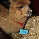 Hi - my name is Bobby.. I know because my tag says so!! by Glynn Jackson