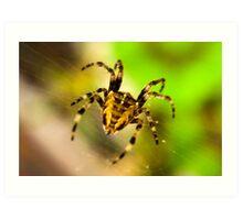 Macro Spider Art Print