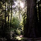 Afternoon in the forest by cherylwelch