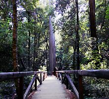 Big Basin Bridge by cherylwelch
