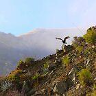 Big Sur Hawk by cherylwelch