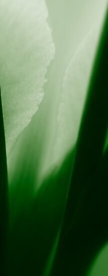greens by SNAPPYDAVE