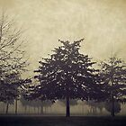 Foggy Trees at Winter time  by Sim Baker