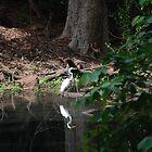 Bird reflection by Umashanker T