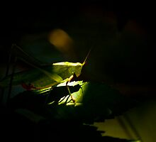 Grasshopper by vasu