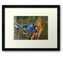 Snatch and Grab Framed Print