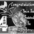 B&W PHOTOGRAPHY 4 YOU FEATURED Banner by Qnita