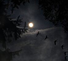 ~ Fly by Night ~ by Brenda Boisvert