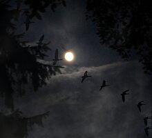 ~ Fly by Night ~ by Brenda Boisvert