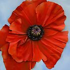 poppy I by cathy savels