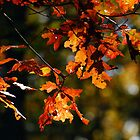 Autumn Leaves by piecesofnature