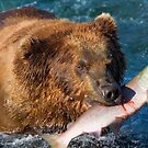 Fresh salmon for dinner tonight! by Michael S Nolan