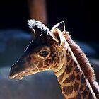 Baby Giraffe by loiteke