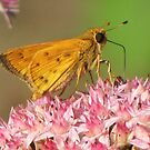 Skipper Profile No. 2 by lorilee