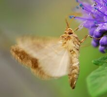moth liked purple by davvi