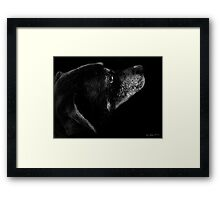 Old Girl  Framed Print