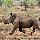 """*WHITE RHINOCEROS* - Ceratotherium simum - YES! I CAN DO IT ! (EVER SEEN A BABY RHINO... """"TAKE OFF"""")   by Magaret Meintjes"""