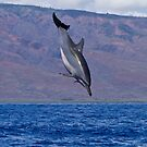 Hawaiian Spinner Dolphin by Michael S Nolan
