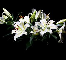 Lilies by Lynne Morris