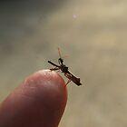Juvenile Praying Mantis by Jennifer Suttle
