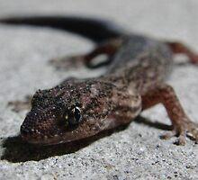 Carpark Gecko by Dan & Emma Monceaux
