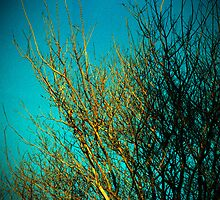 branches all ordinary and special by Juilee  Pryor