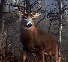 Buck on ridge portrait - White-tailed Deer by Jim Cumming