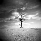 Lone tree by Craig  Roberts