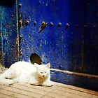 white cat blue door by Erisgo