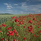 Poppy field by photontrappist