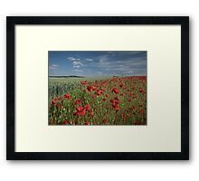 Poppy field Framed Print