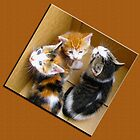 "3 Kitties in a Box, Oh My ! by Edmond J. [""Skip""] O'Neill"