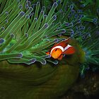 Anemone Friend At Home by Denise J. Johnson