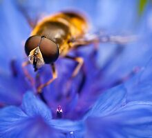 Hoverfly by MertensS