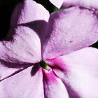 Purple Petunia by aruni