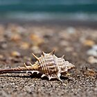 Spiney Shell by tammy lee bradley
