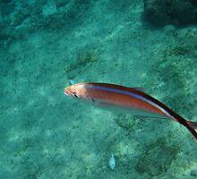 Blue striped fish by mltrue