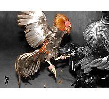 Pinoy Fighting Cock Photographic Print