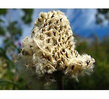 Knit me a flower coat Photographic Print