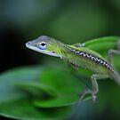 Baby Anole Lizard by Dennis Stewart