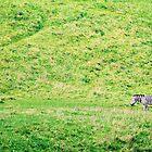 Lonely Zebra by Carrie Bonham