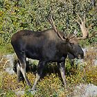Bull Moose by Luann wilslef