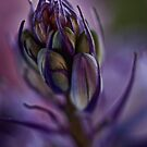 Bluebell Bud by Dianne English