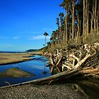 """fallen""    bruce bay, west coast, new zealand by rina  thompson"