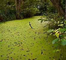 Green Backwater by Geoff Carpenter