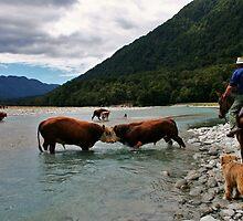"""territorial II"" paringa river, south westland, new zealand by rina  thompson"