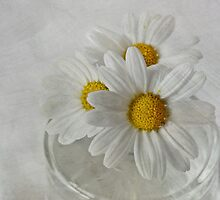 Daisies in a glass jar by inkedsandra